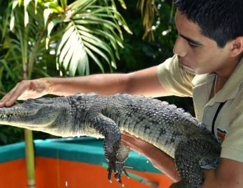 Crococun Interactive Adventure