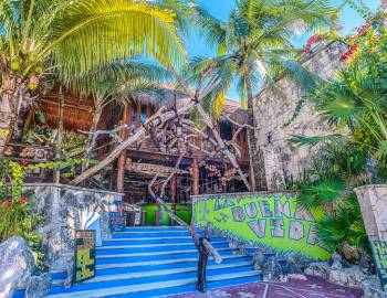entrance of la buena vida with canopy of palm trees and blue stairs to door