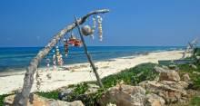 Isla Mujeres Coast Shells